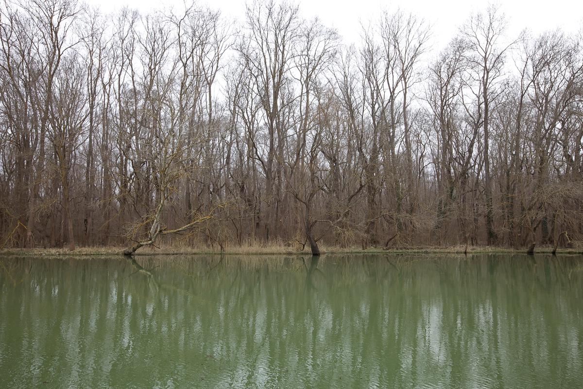 Kamchia river and kamchia biosphere reserve near Varna, Bulgaria