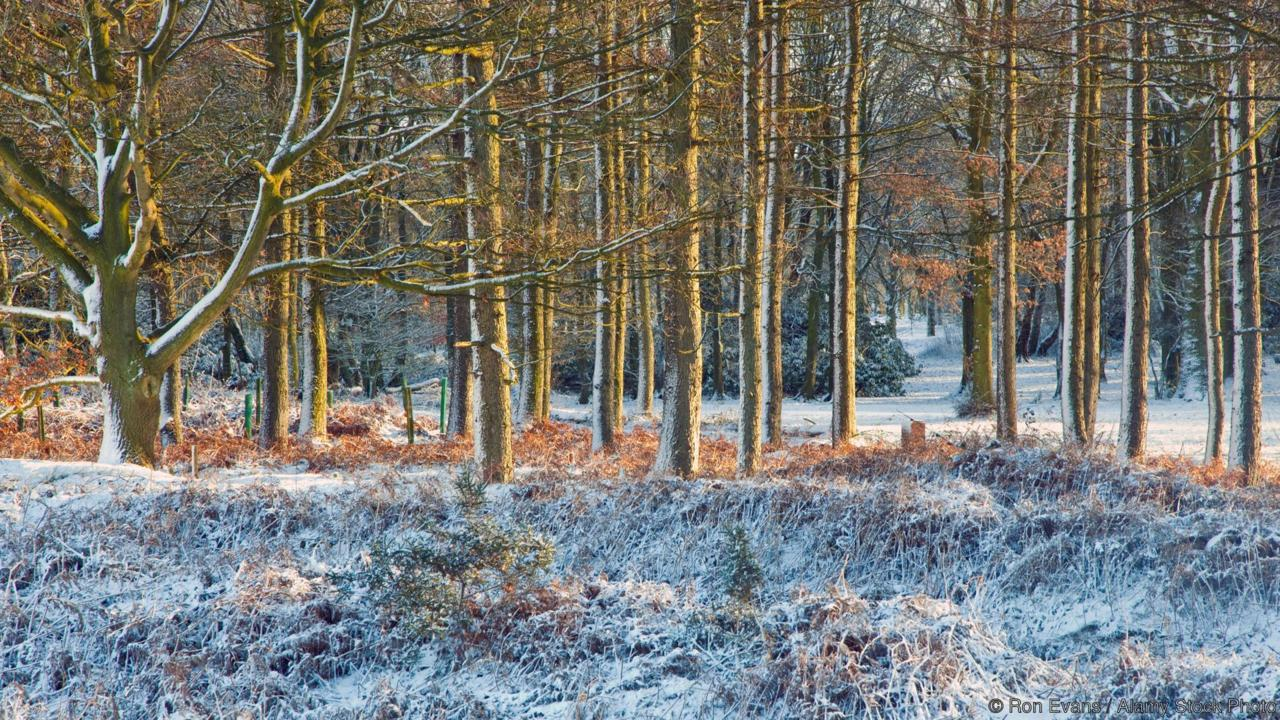 CFGTGR Severe frost in mid-winter Cannock Chase AONB (area of outstanding natural beauty) in Staffordshire England UK